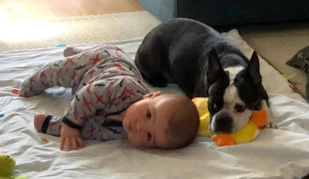 Boston terrier Chica lying beside baby Kyle in 2020